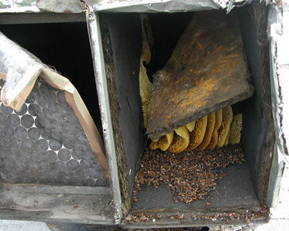 Commerical air ducting filled with bees